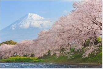 Póster Flores de cerejeira ou sakura e fuji montanha no fundo