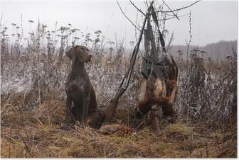 Póster hunting dog