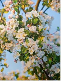 Póster Macieira flor