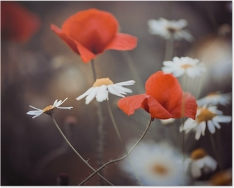 Póster red poppy flowers and wild daisies