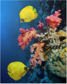 Póster Underwater image of coral reef and Masked Butterfly Fish