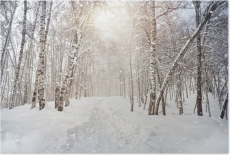 Póster Winter birchwood