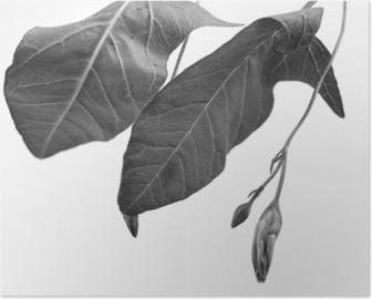 Poster Alan derinliği ile bitki nesnenin Siyah ve beyaz Makro çekim
