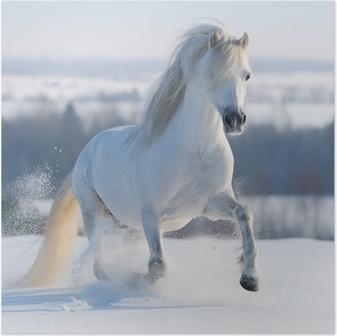 Poster Beyaz atı dörtnala