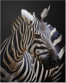 Poster Bir Burchell en Zebra bir Headshot