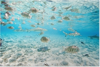 Poster Bora Bora sualtı