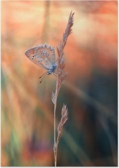 Poster Kelebek