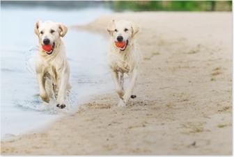 Poster Köpek çalışır, su spreyi