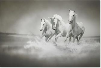 Poster Su ile çalışan beyaz atların Sürü