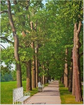 Poster Aantal banken in de zomer park