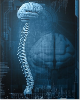 abstract design with the brain and the spine Poster
