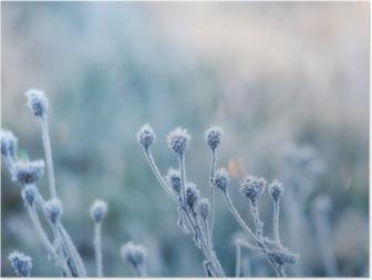 Poster Abstrakt naturlig bakgrund från fryst växt täckt med rimfrost eller rimfrost
