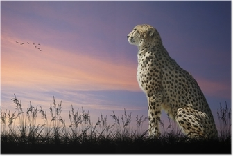 African safari concept image of cheetah looking out over savannn Poster