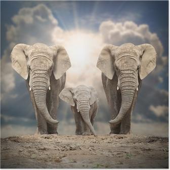 Poster Afrikaanse olifant familie op de weg.