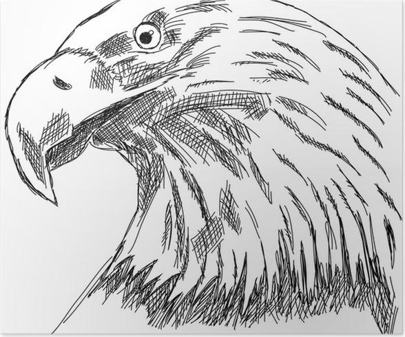 Poster aigle aigle faucon pr dateur t te de dessin d - Dessin de faucon ...