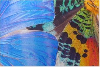 Póster Ala mariposas multicolores