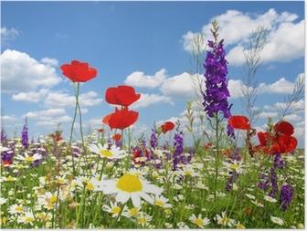 Póster Amapola roja y flores silvestres