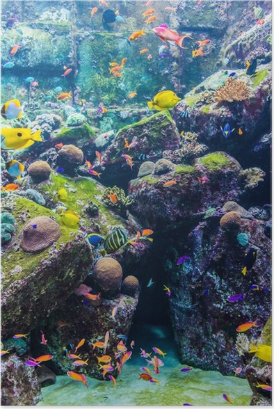 Aquarium Tropical Fish On A C Reef Poster Pixers We Live To