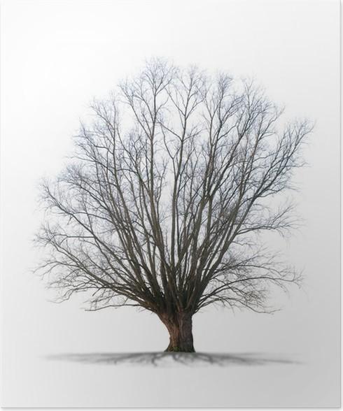 arbre sans feuilles sur fond blanc poster - Arbre Sans Feuille