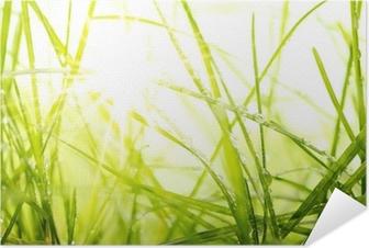 Póster Autoadhesivo Hierba verde del verano y la luz solar