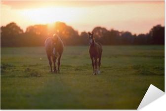 Póster Autoadhesivo Madre caballo con potro en tierras de cultivo al atardecer. geesteren. achter