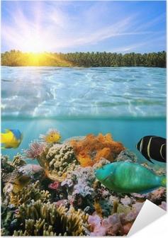 Póster Autoadhesivo Puesta de sol y colorida vida marina bajo el agua