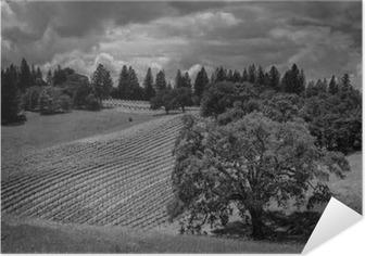 Póster Autoadhesivo Shake Ridge Ranch viñedos