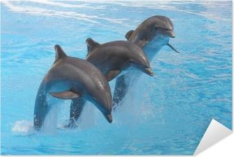Póster Autoadhesivo Trío de delfines