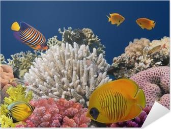 Póster Autoadhesivo Vida submarina de un arrecife de coral duro, mar rojo, Egipto