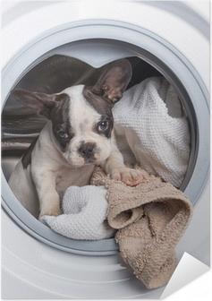 Poster autocollant Bouledogue français chiot à l'intérieur de la machine à laver