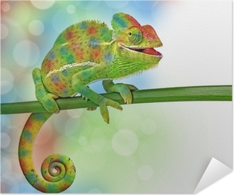 Poster autocollant Caméléons et de couleurs