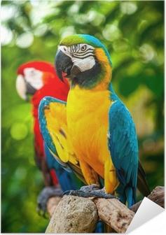 Poster autocollant Coloré ara perroquet bleu