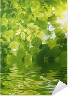 Poster autocollant Les feuilles vertes avec rayon de soleil