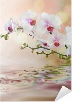 Poster autocollant Orchidées blanches sur l'eau avec la baisse