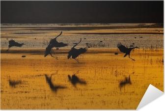 Poster autocollant Sandhill grues au coucher du soleil