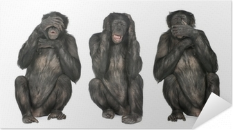 Poster autocollant Three Wise Monkeys: Chimpanzee - Simia troglodytes (20 ans ol