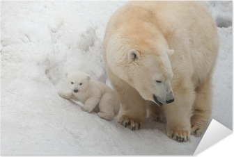 Poster autocollant White bear