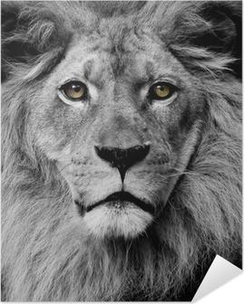 Poster autocollant Yeux Lion