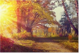 Poster Automne. Automnal Park. Arbres et des feuilles à la lumière du soleil d'automne