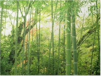 Poster Bamboebos