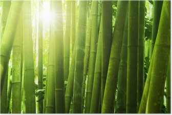 Bamboo forest. Poster
