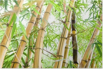 Póster Bamboo forest