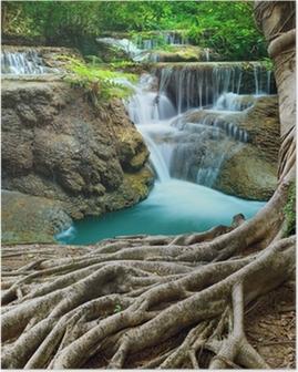 Poster Banyan Tree en kalksteen watervallen in diepe bossen zuiverheid gebruik n