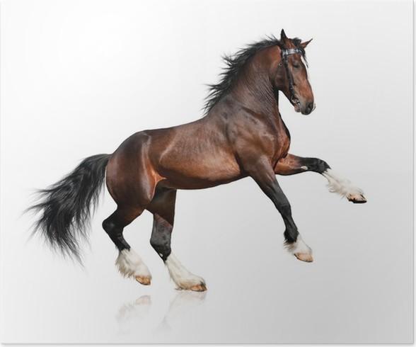 Poster Bay cheval isolé sur fond blanc • Pixers® - Nous vivons pour ...