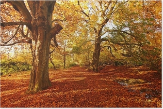 Beautiful Autumn in the Park Poster