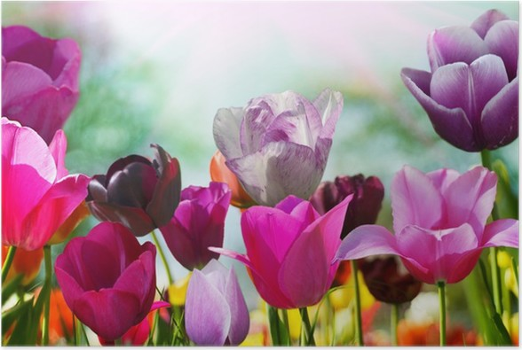 Beautiful spring flowers tulips poster pixers we live to change beautiful spring flowers tulips poster mightylinksfo