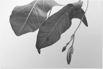 Black and white macrophoto of plant object with depth of field Poster
