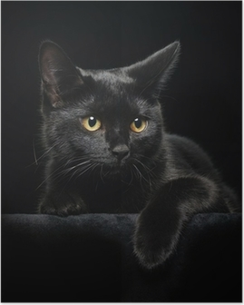 Black cat with yellow eyes Poster