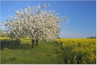 Poster Bloeiende appelboom