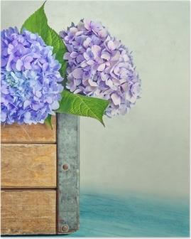 Blue hydrangea flowers in a wooden box Poster